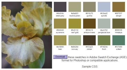 palette generator bighugelabs.com