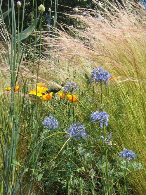 garden of contrasts