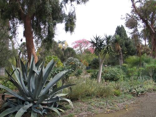 Ruth Bancroft Garden Oct 09