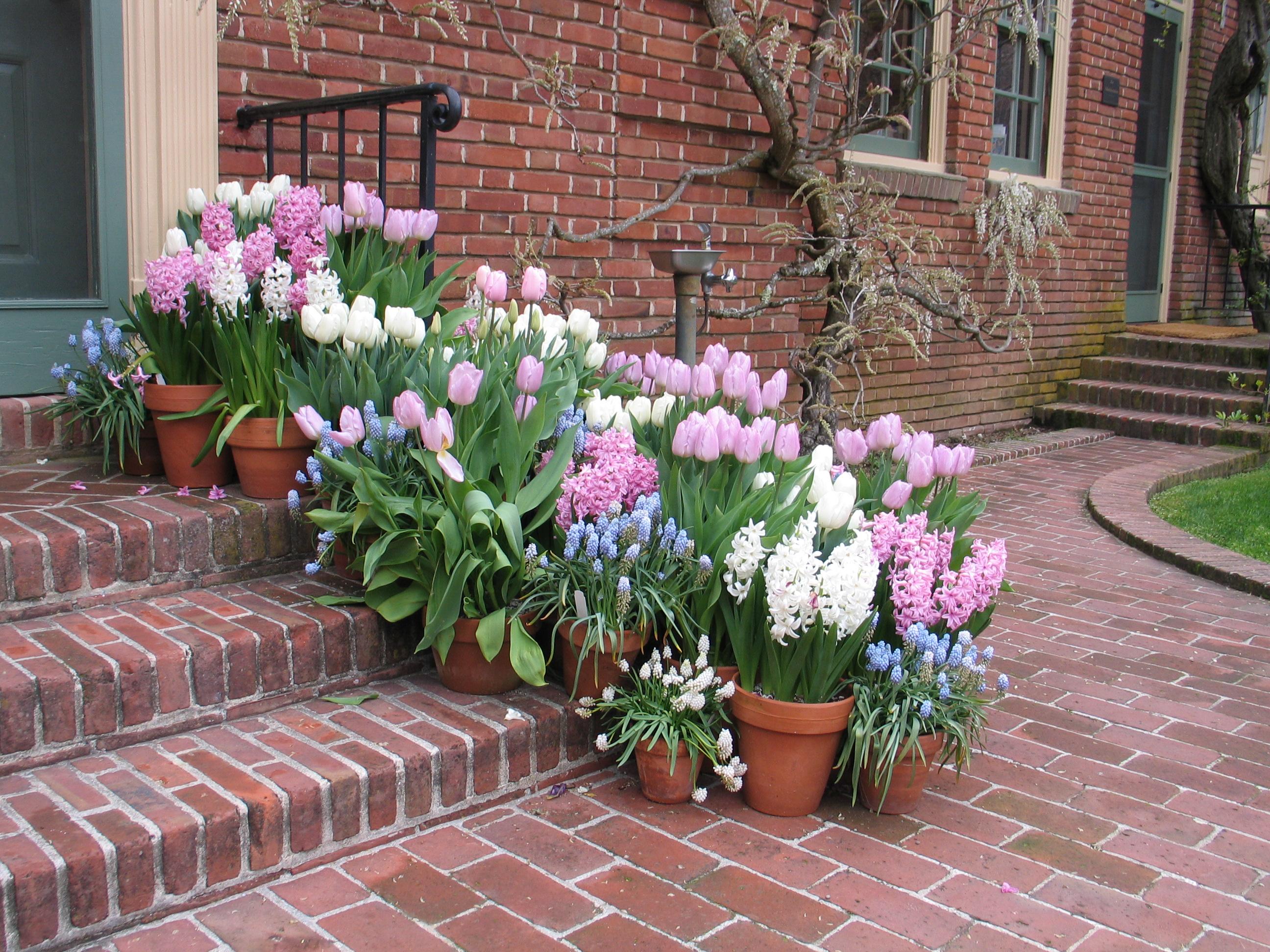 Best Bulb Garden Design Ideas Images Interior Design