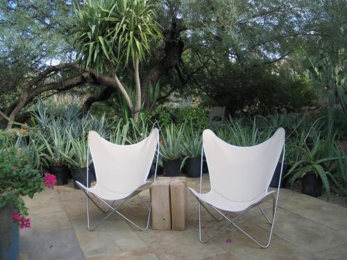 10 Desert Botanical Garden 45