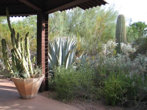 13 Desert Botanical Garden 72