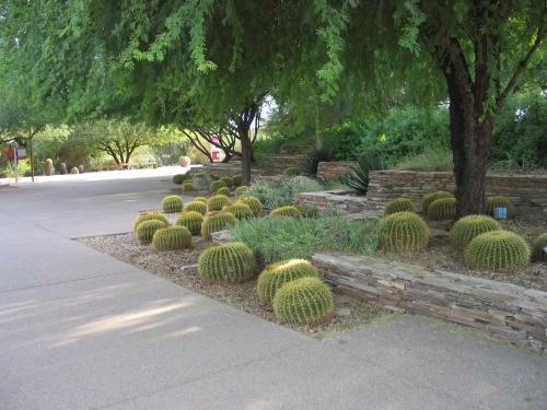 19 Desert Botanical Garden 93