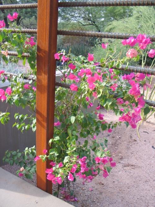 2 Desert Botanical Garden 41