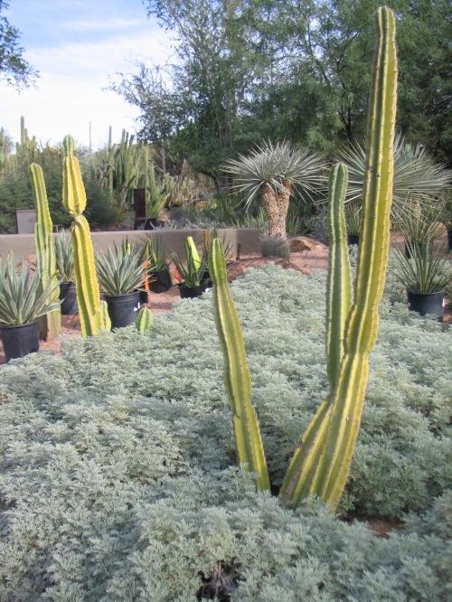 24 Desert Botanical Garden 44
