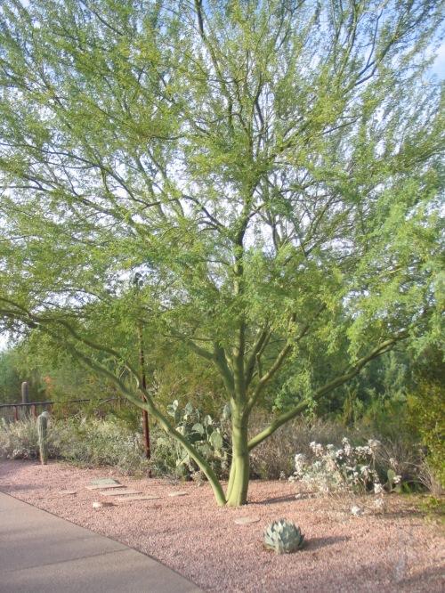 25 Desert Botanical Garden 87