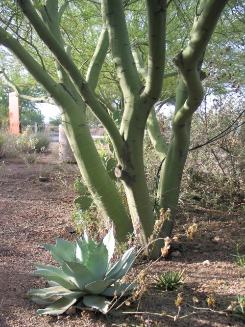 26 Desert Botanical Garden 88
