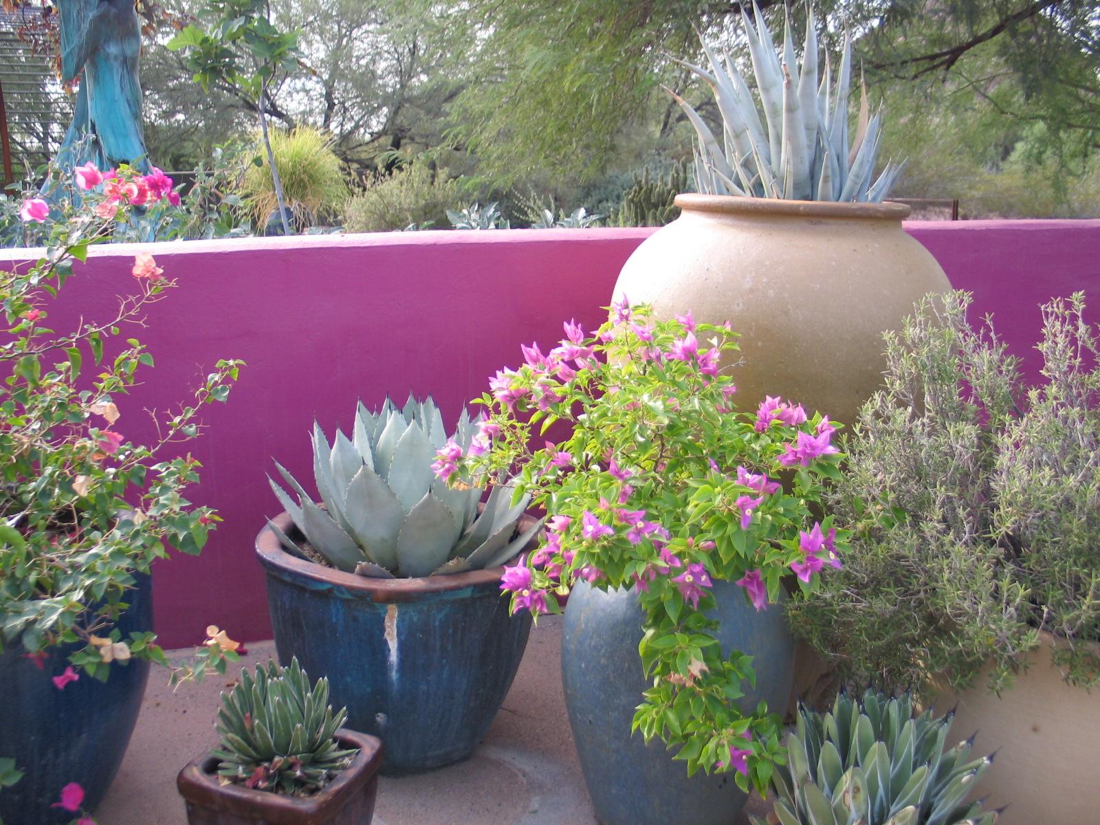 Superb 8 Desert Botanical Garden 52