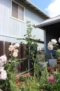 150413 magnolia tree 015